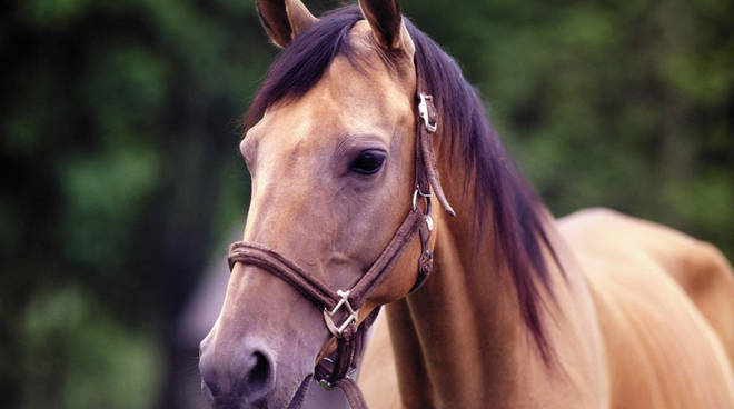 country_horse